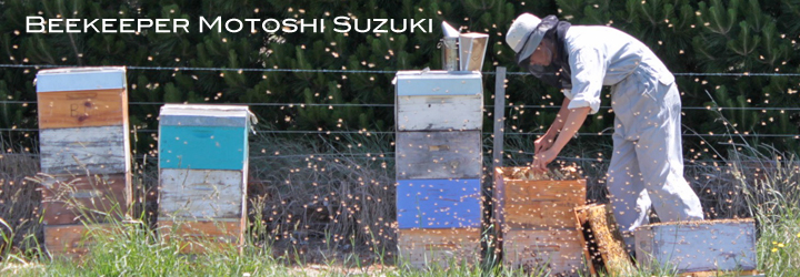 日本人養蜂家